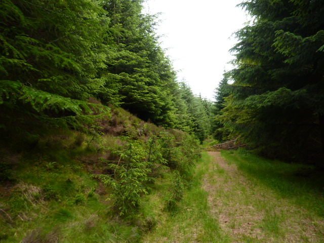 Unused forest  track on upper slopes of Quarry Hill