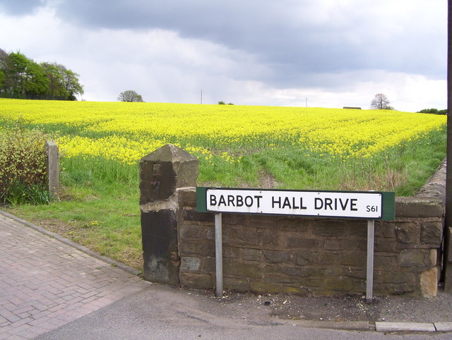 Rape crop by Barbot Hall Drive
