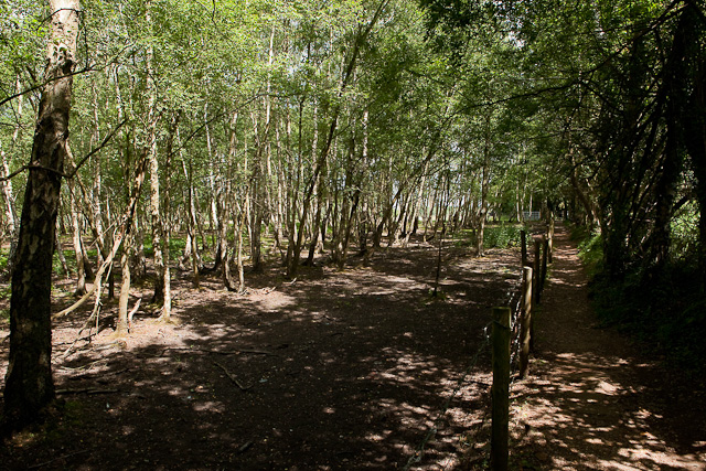 Footpath and woodland beside Test Valley Business Park