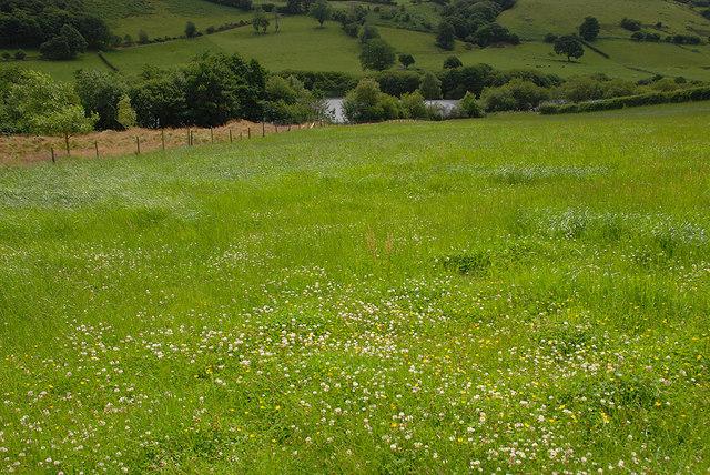 Field above Llyn y Fan