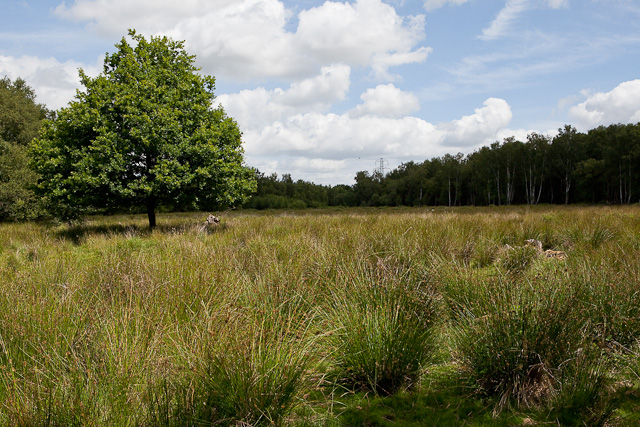 Boggy clearing on Baddesley Common