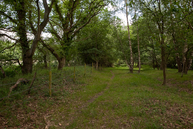 Path along western edge of Baddesley Common