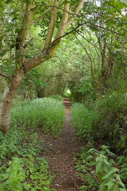 Path going towards Green Lane