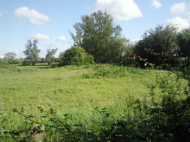 Crayford Marsh from Moat Lane