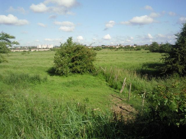 Crayford Marsh