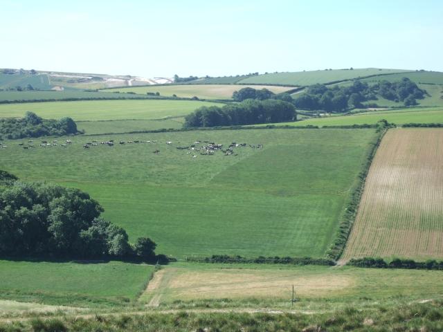 Fields to west of Winterborne Monkton