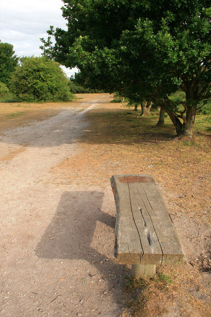 Bench and oak tree