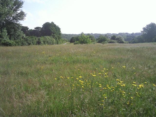 East Wickham Open Space in summer