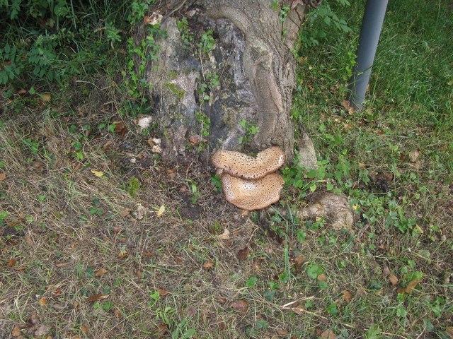 Fungi on a tree