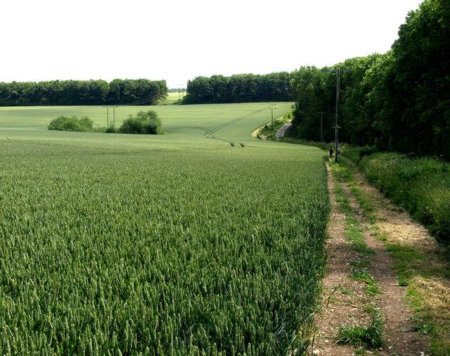 Wolds' Wheatfield