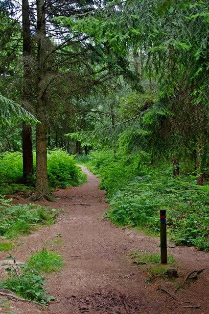 Path and waymark, Hawkbatch, Wyre Forest