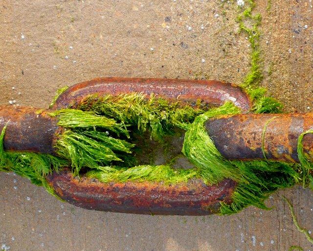 Ferry Chain