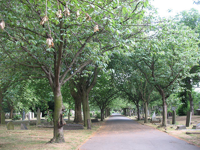 Former St Mary's Cemetery, Battersea