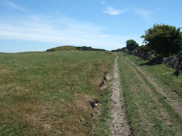 Path to tumulus on Bronkham Hill