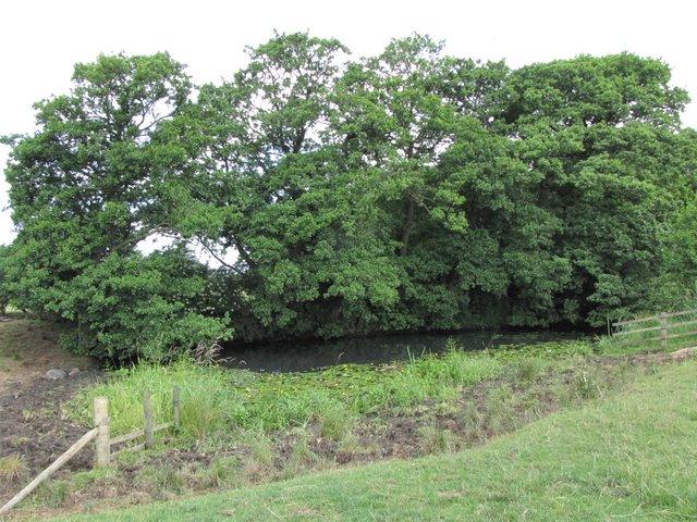 Pond in Farmland