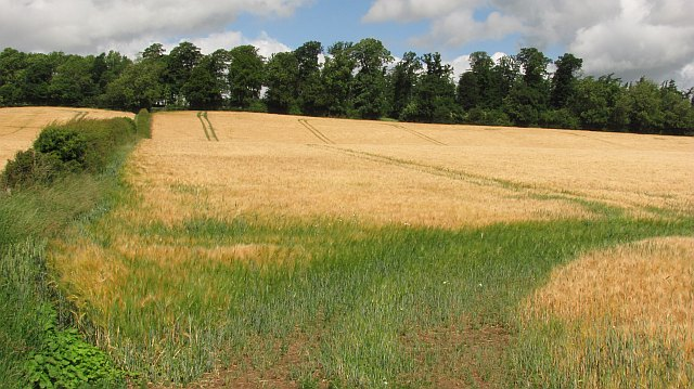 Barley, Makerstoun