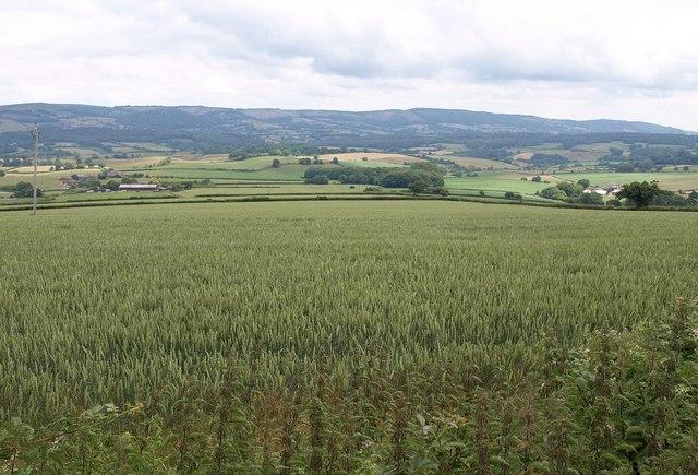 Wheatfield above Preston