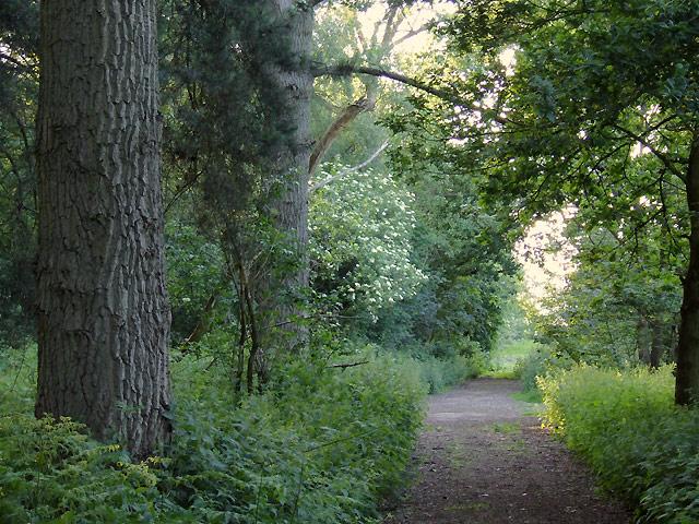 Public footpath by Fradley Wood, Staffordshire