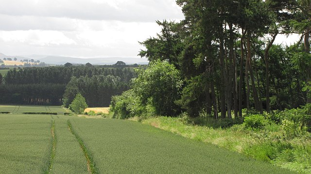 Wheat field, Makerstoun