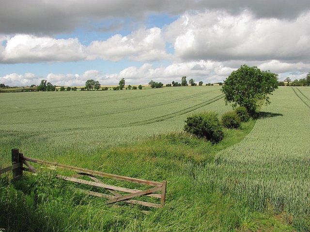 Wheat, Stodrig