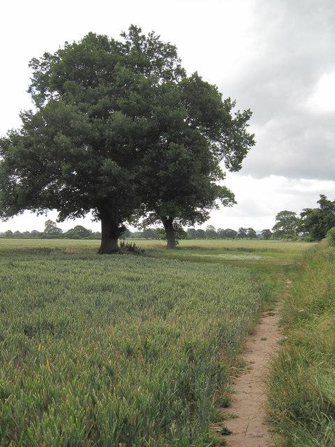 Footpath near Littleton