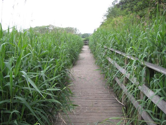 Bracknell Mill Pond: Reedbed boardwalk