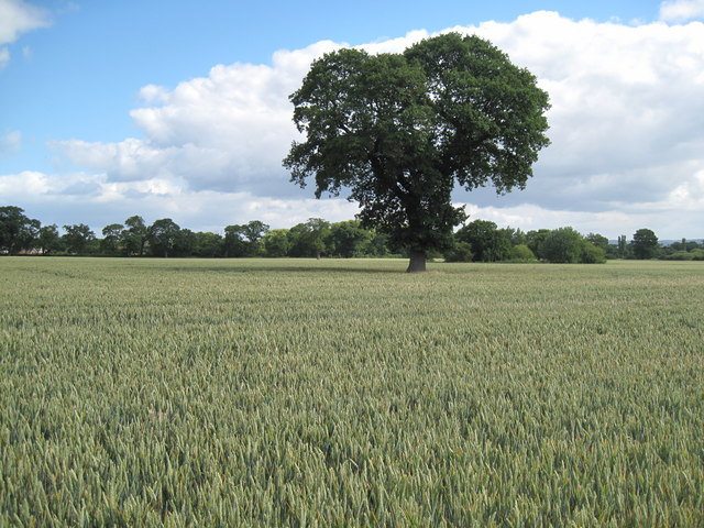 Farmland of Cheshire