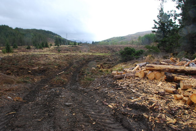 Clear felled area photo 1