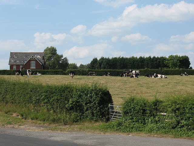 Cows in a field off Brereton Lane