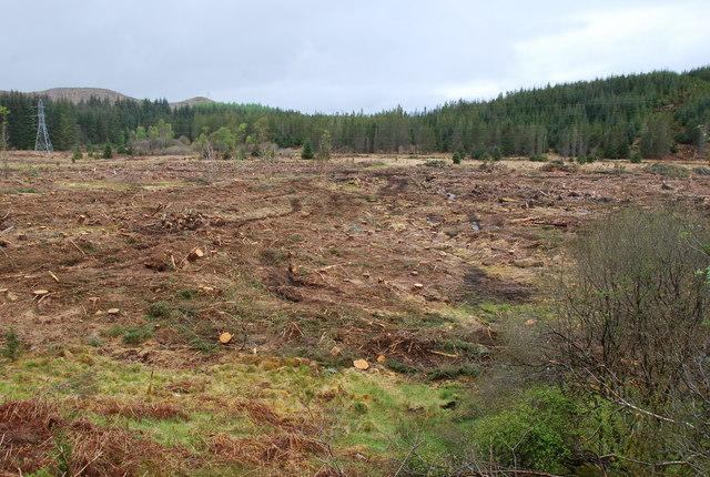 Clear felled area  photo 2