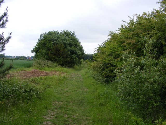 Footpath towards Trimley