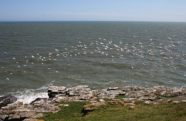 A Flock of Gulls