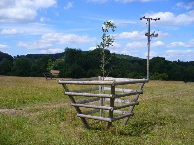 Tree Guard at Tilsey Farm