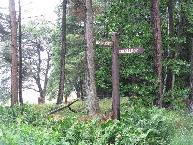 Forest walk signpost