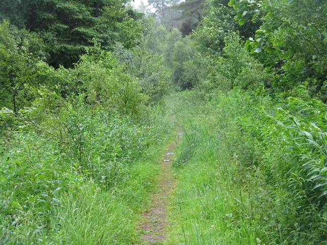 Footpath through the woods