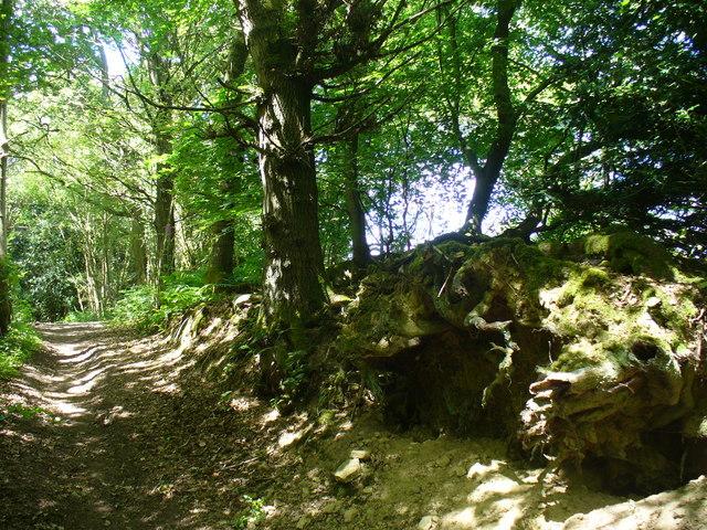 Greensand Way on Juniper Hill