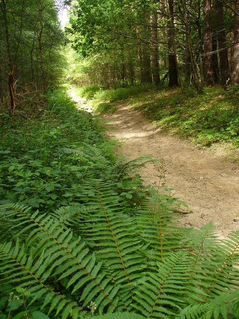 Juniper Hill, Greensand Way