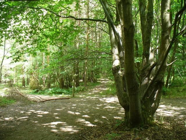 Crossways on Juniper Hill