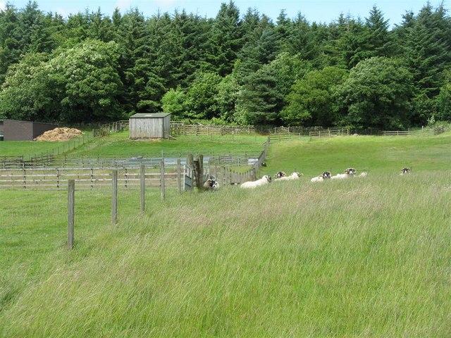 Longmuir Plantation