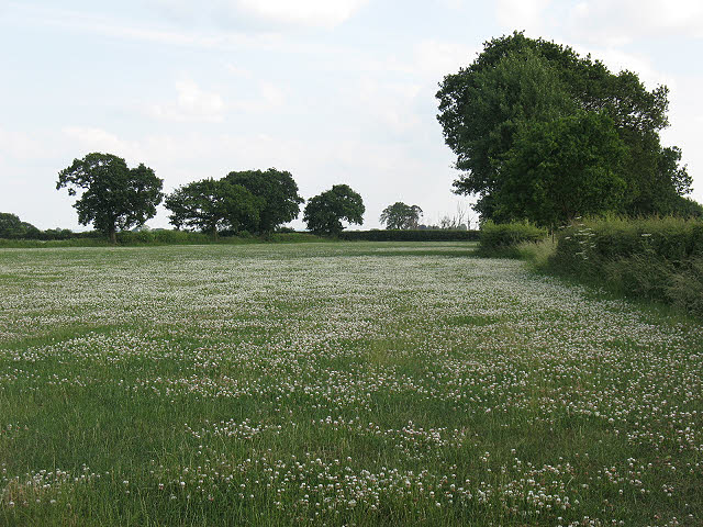 Field of clover off Lily Lane