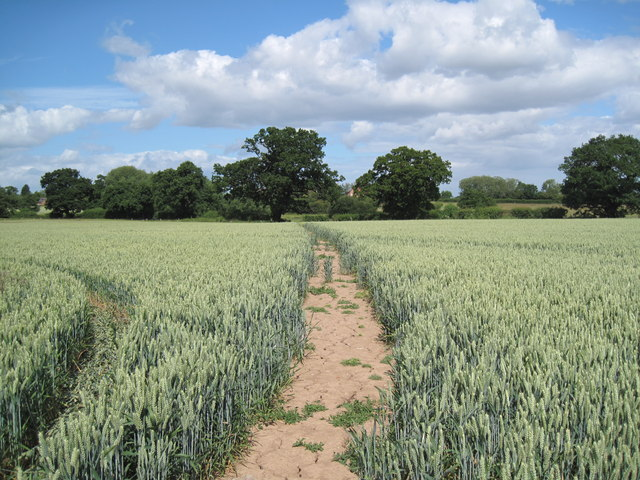 View of Footpath by Cotton Farm