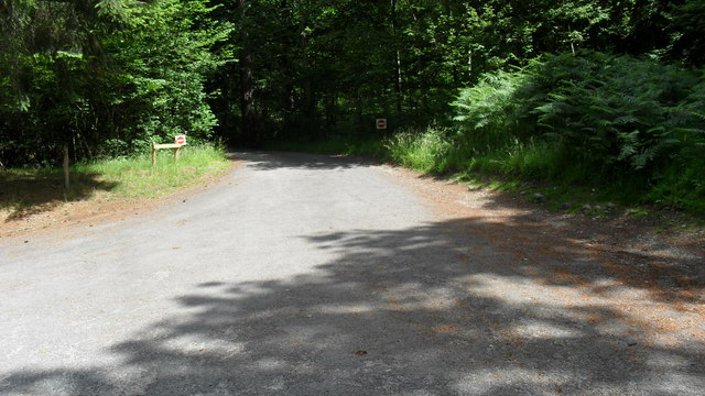 Road leading from woodland car park at Lady's Rake in the Great Wood
