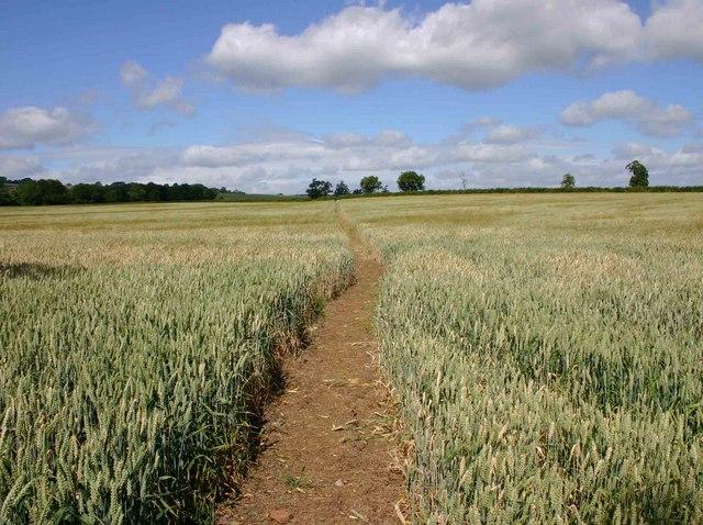 Footpath to Ilmington from Darlingscott