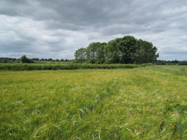 Cheshire Farmland.