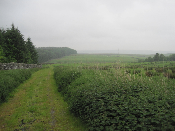 Bridleway towards Blacka Burn