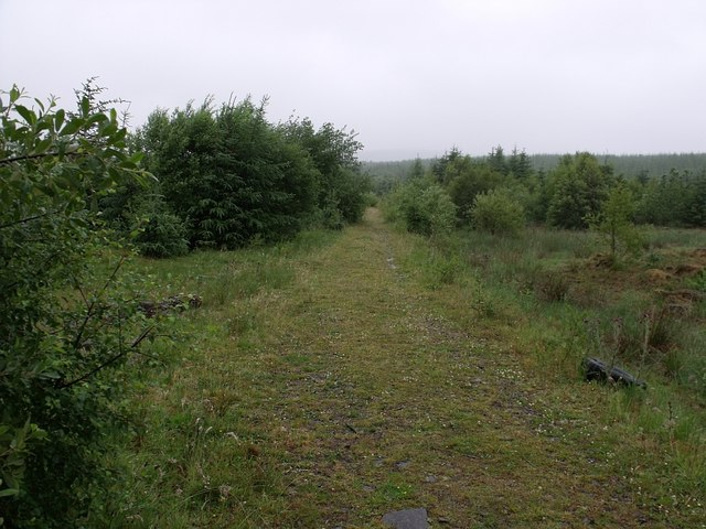 Forestry track near Todholes