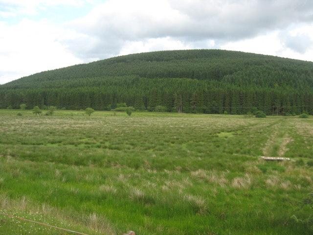 Rough grazing near Davington in Dumfries and Galloway