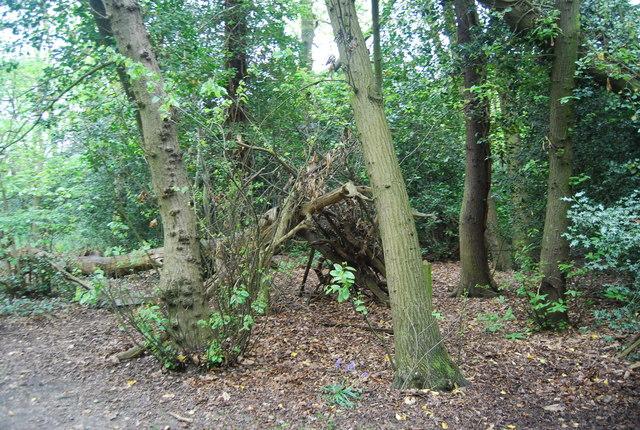Woodland hide, Beckenham Place Park