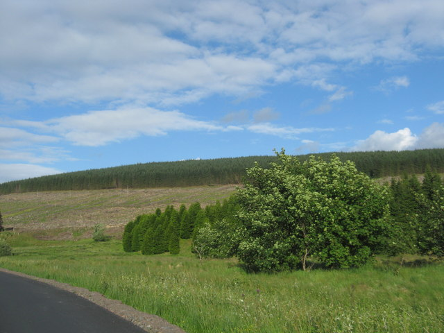 Young trees at Quickningair Hill