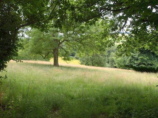 Field above Monksilver